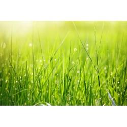 Nupjautos žolės kvapnusis...