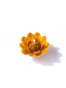Plaukiojanti lelija