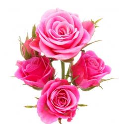Rožių kvapnusis aliejus (10...